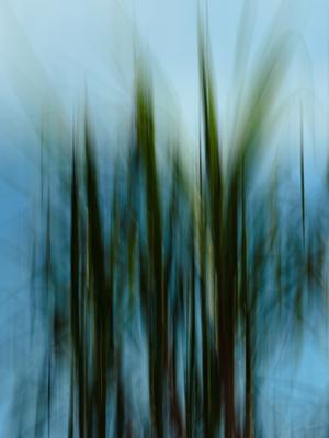 ventania nos arbustos_2