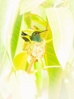 beija flor no ninho_2