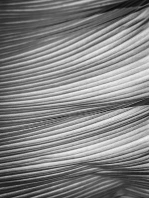 linhas e dobras