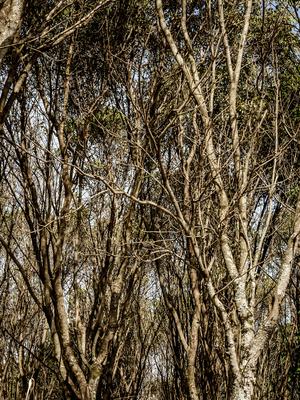 floresta seca_em