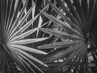 folhagens tropicais