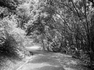 estrada entre arvores_em