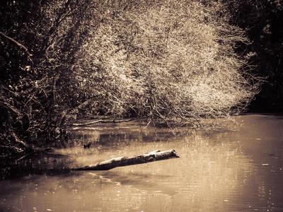 lago sepia