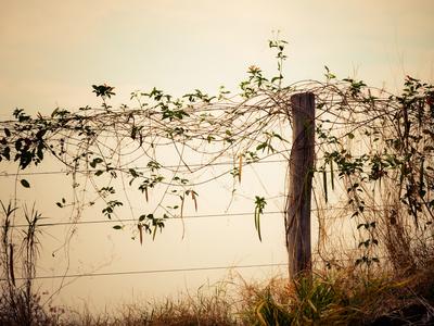 arbusto e cerca_2