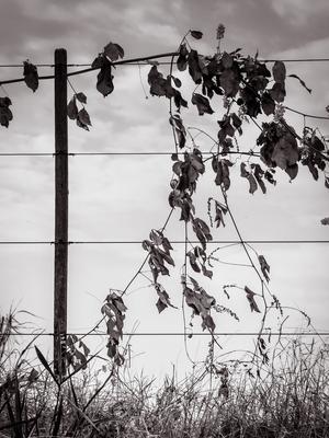 arbusto e cerca_3