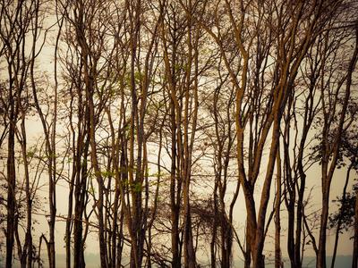 floresta seca_2
