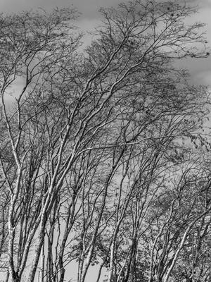 floresta seca_3