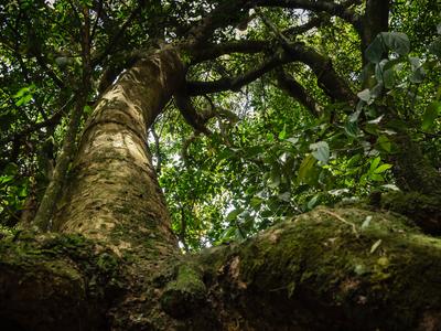 floresta imponente