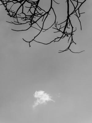trama de galhos e nuvem