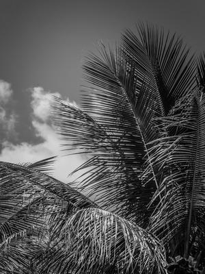 folhagem de palmeira e nuvem