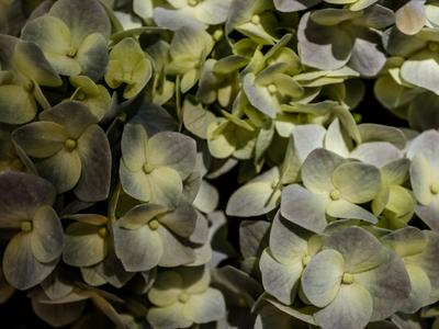 flores silvestres_2 em