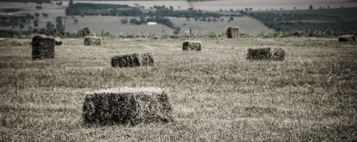 campo de feno