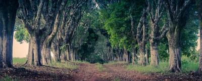 estrada de folhas entre arvores