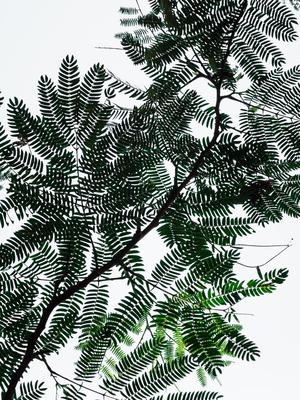 folhas em contraluz_2