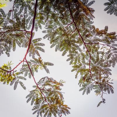 cortina de folhas_10
