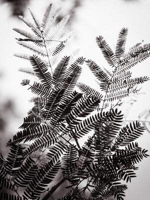 folhas espinha de peixe_2