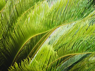 folhagem tropical_10