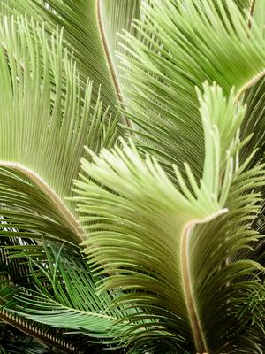 folhagem tropical_12