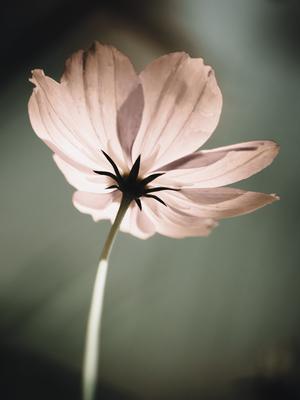 pequena flor rosada