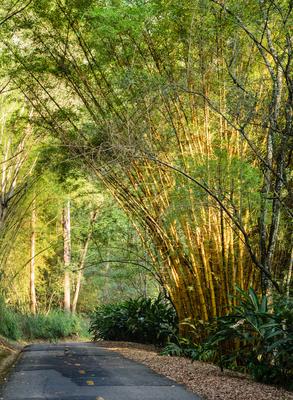 estrada entre bambus 150_2
