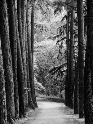 caminho da paz_2