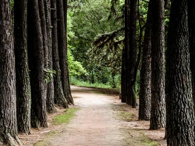 caminho da paz_3