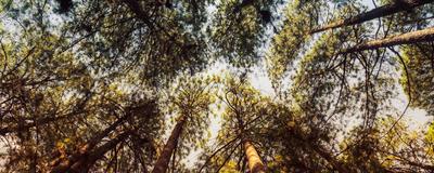 floresta dourada_em