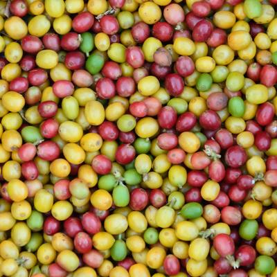 grãos coloridos de café