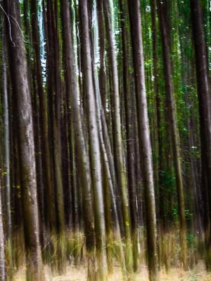 floresta abstrata_2