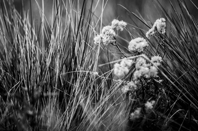 Flor em preto e branco