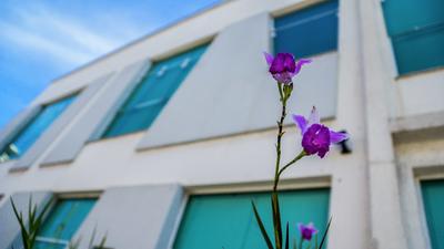 Flores na cidade