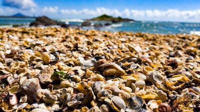 Chão de conchas