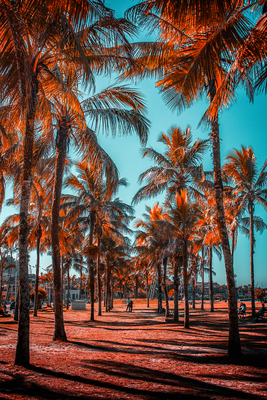 Paranaguá Paradise