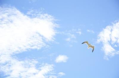 Céu e o pássaro