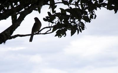 Folhas e pássaro