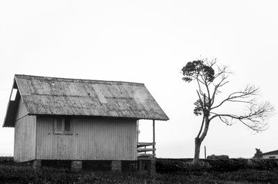 A cabana e a árvore