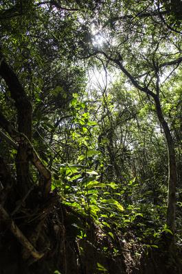 Floresta Part 3