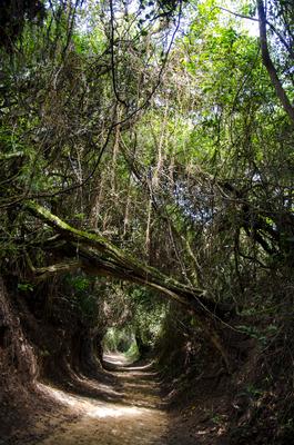 Floresta Part 4