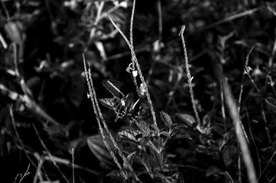 Plantas e borboleta
