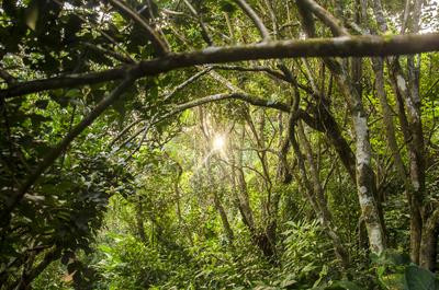 Sol na floresta - SC