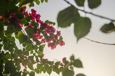 Flowers - SC