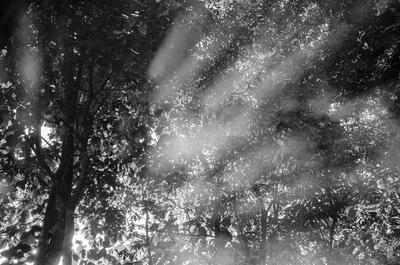Neblina - SP