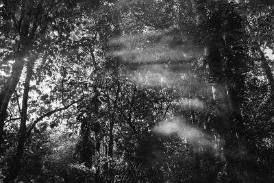 Neblina - part2 SP