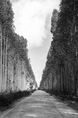 Nature - 022