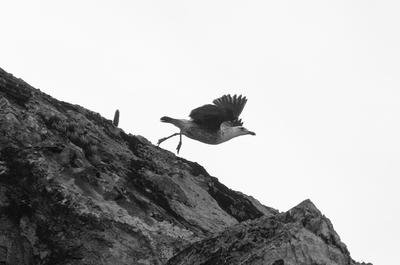 O voo do pássaro