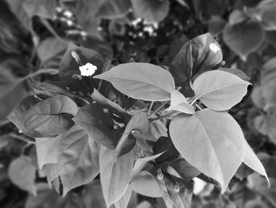 FLORES FOTOGRAFIA - 106X80 - 09-05-2020 -- 01A2