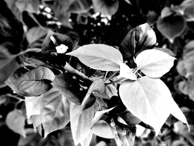 FLORES FOTOGRAFIA - 106X80 - 09-05-2020 -- 01A3