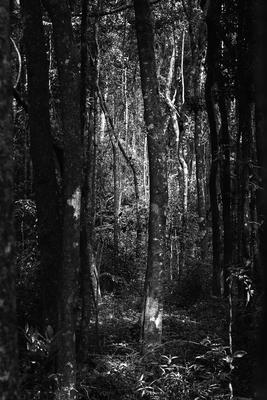 Floresta IV