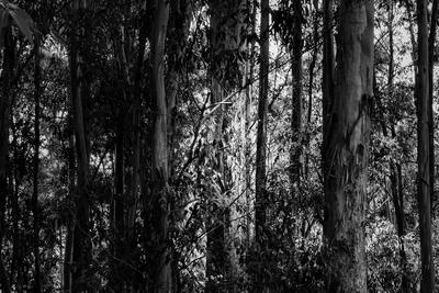 Floresta V