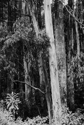 Floresta Adentro I